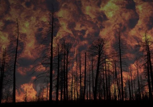 斯坦福大学开发新型凝胶 可以提前避免发生火灾
